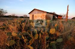 Cactus Barn