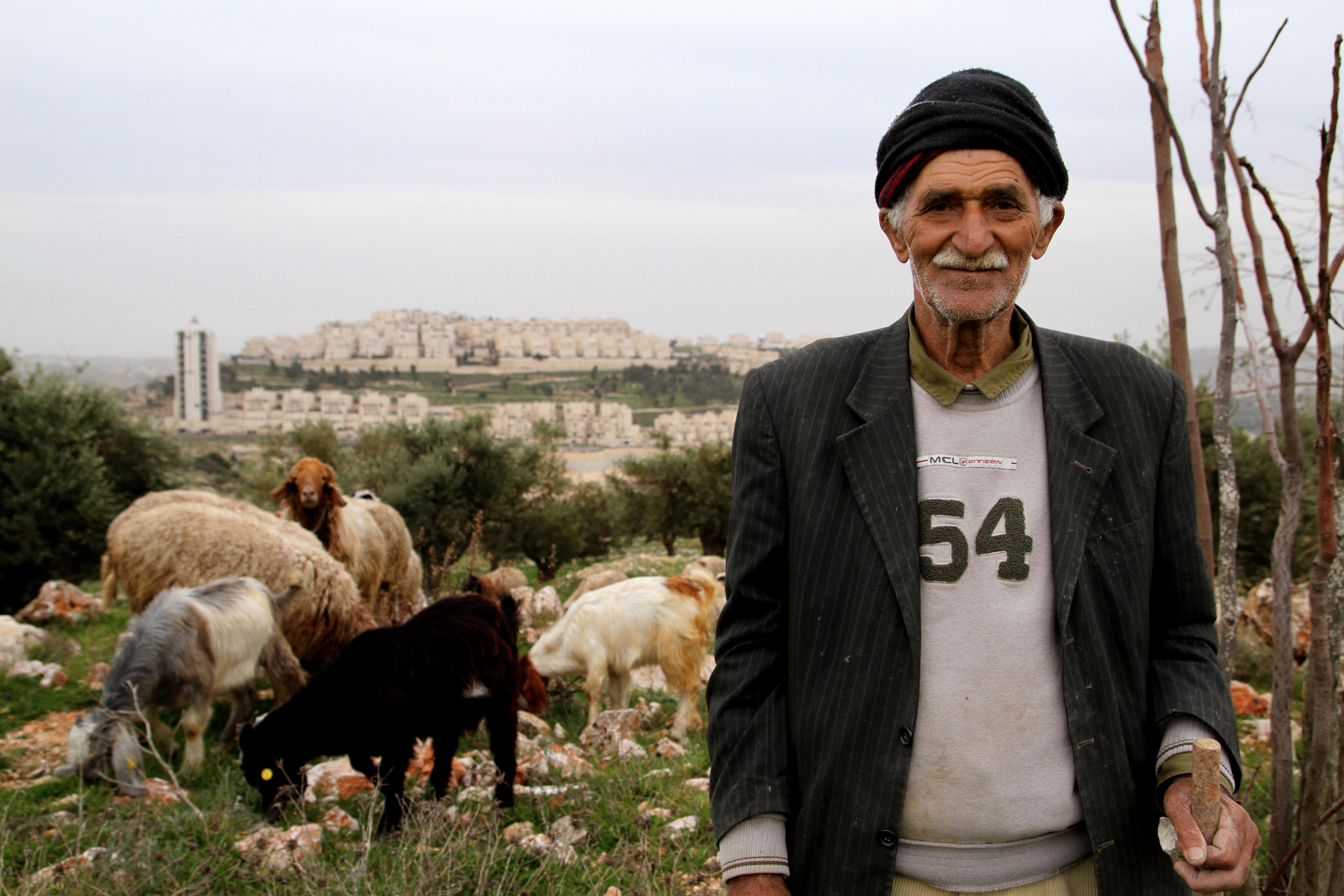 Sheep Herder in Jerusalem