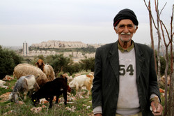 Sheep Herder in Jerusalem