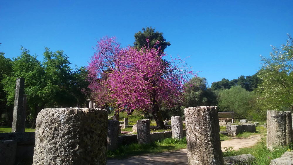 Ancient Olympia in the springtime
