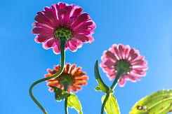 1st flowersSXP_5499.jpg