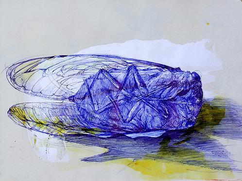 Tereza Lochmann, Cigale, 2019, stylo bille et acrylique sur papier.