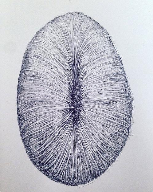 Tereza Lochmann, Sea Vaginas II, 2018, stylo bille sur papier.