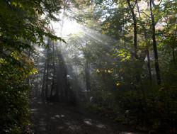 summer-trees-sunlight-trail