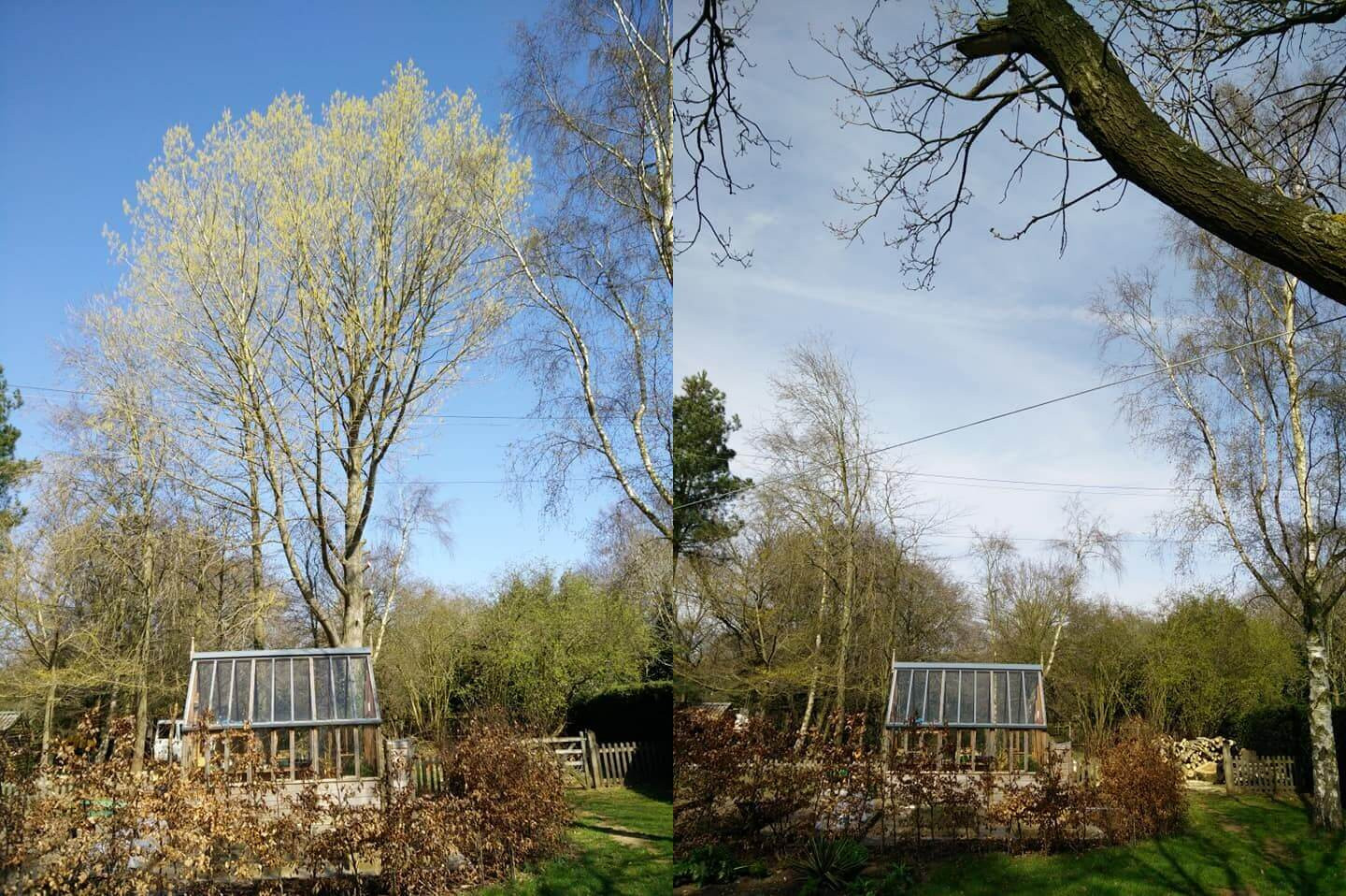 Poplar Removal Before and After.jpg