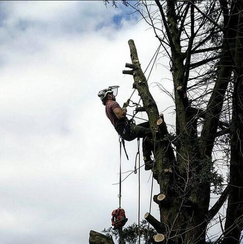 Fur tree removal.jpg