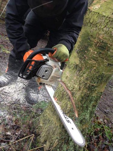 Cutting Treee.jpg