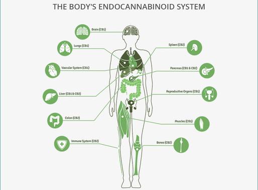 Cannabinoids and Endocannabinoid System