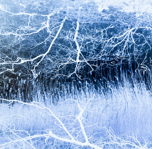 Blue Tree Roots Upper Lake