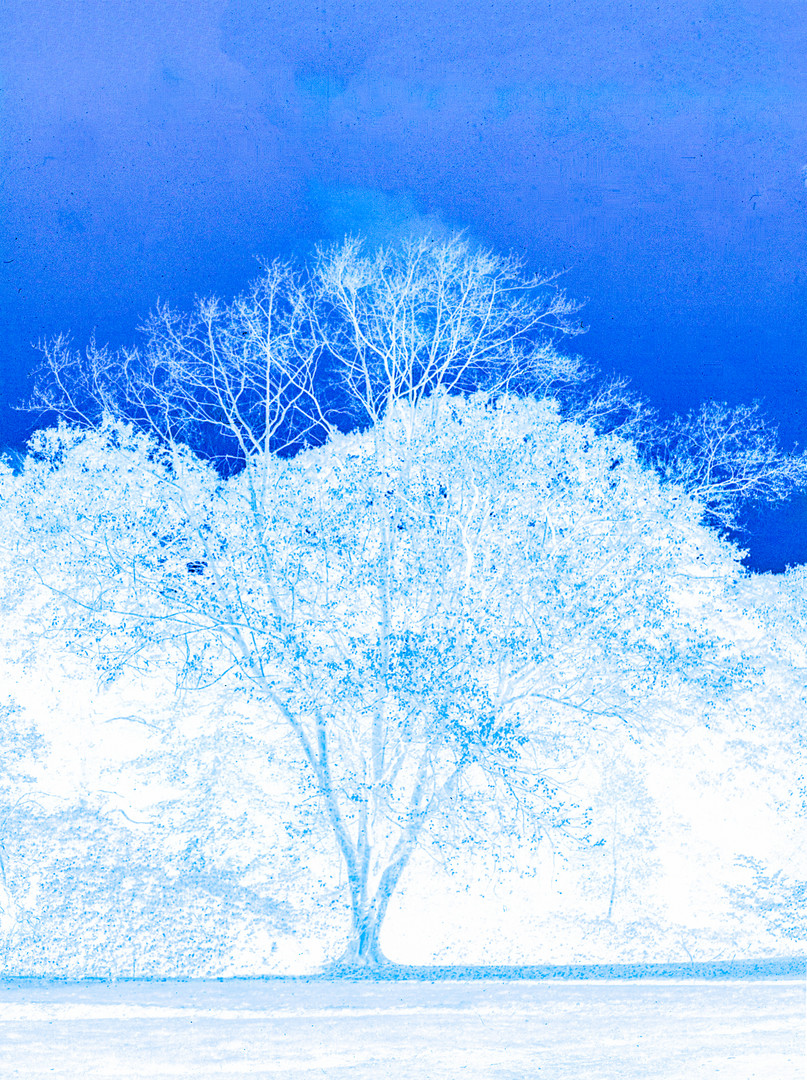 Untitled #13 Blue