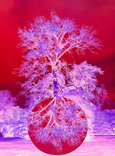 Prince Albert's Oak Tree #2