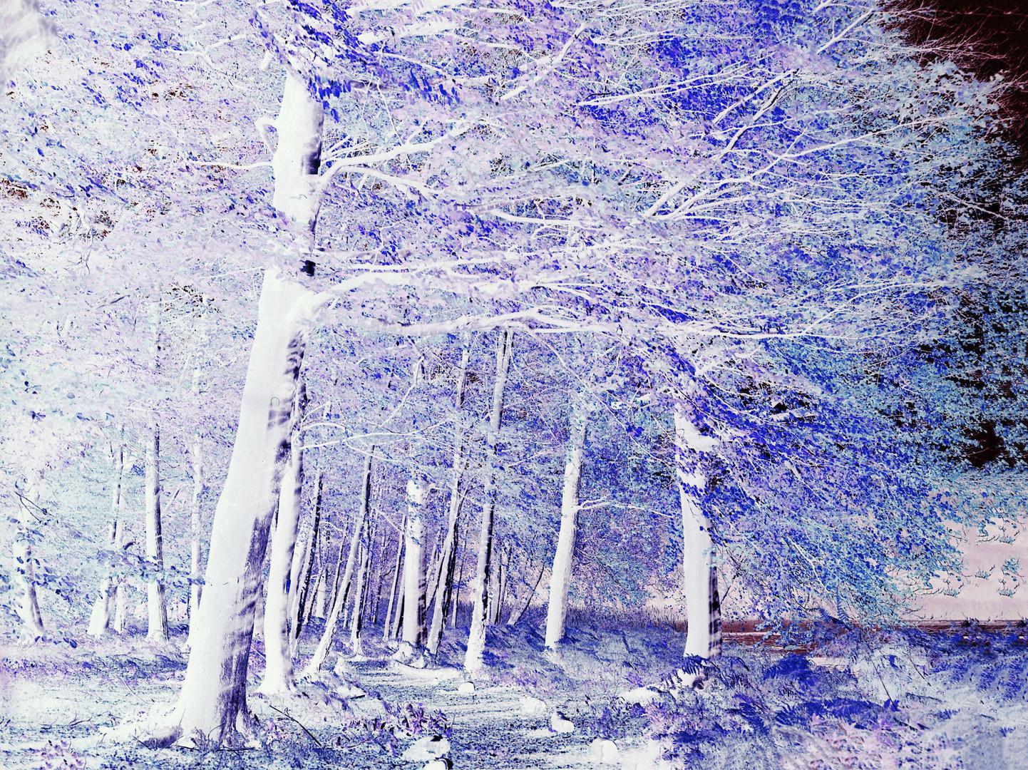 Trees Upper Lake