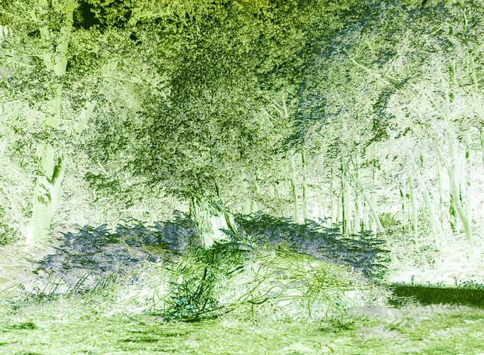 Tree Stump Upper Lake