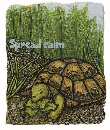 pandemic animals - calm turtle 500x594.j