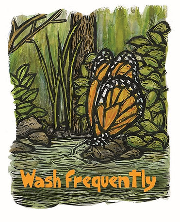 pandemic animals - Wash monarch 500x615.