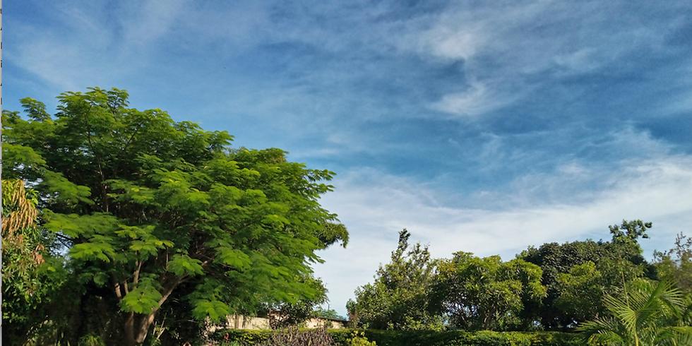 BYOB: Picnic @ KuMushi Gardens