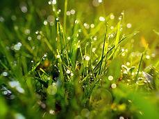 grass-3199370__340.jpg