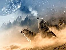 wolves-1400819__340.jpg