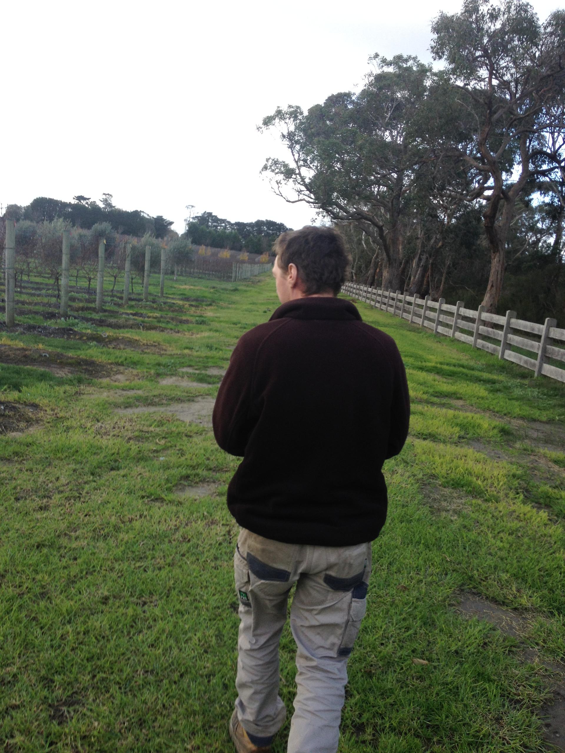 Tour with viticulturist on the Mornington Peninsula