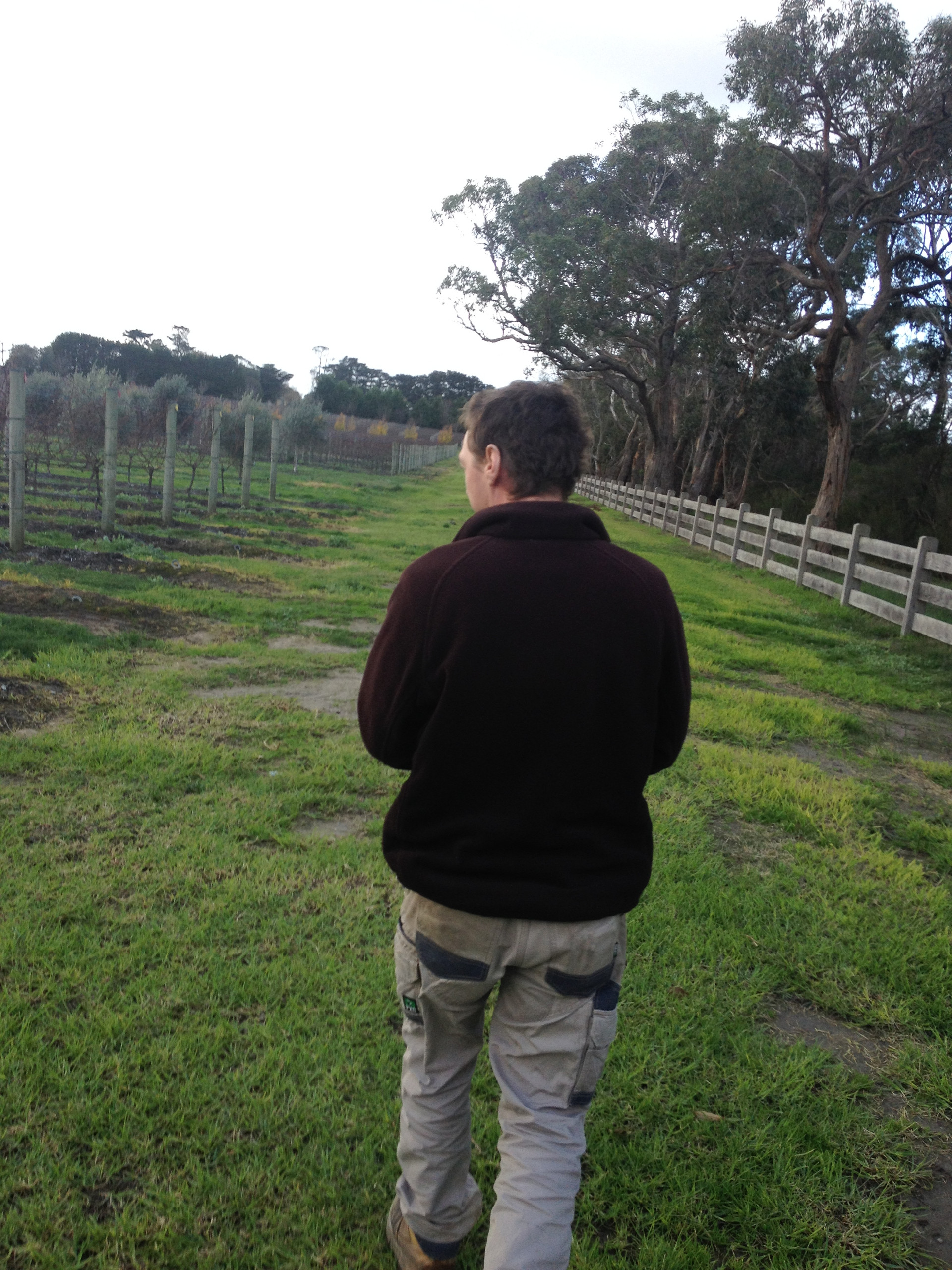Tour with viticulturist on the Mornington Peninsula