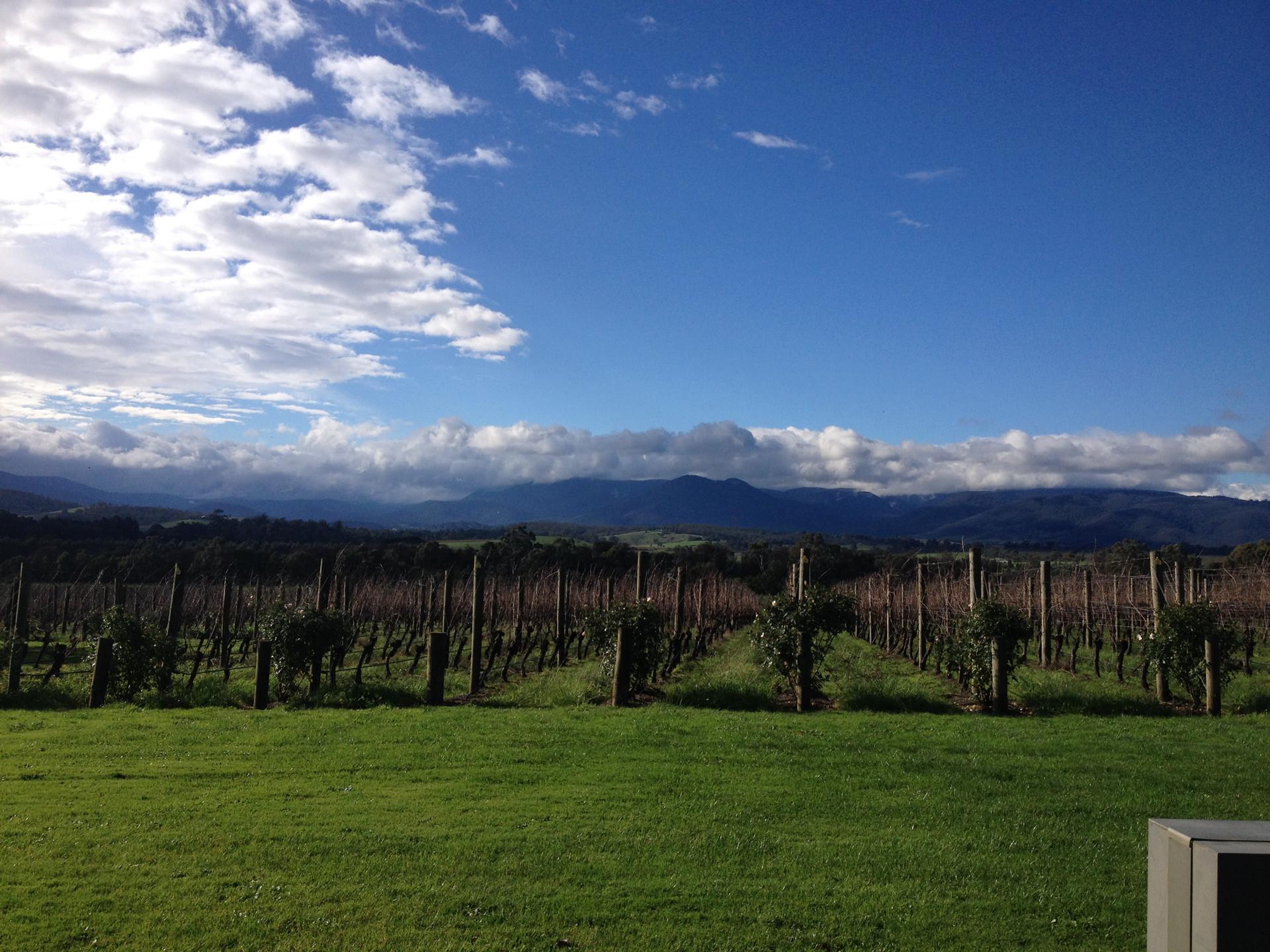 Yarra Valley wine region in Victoria