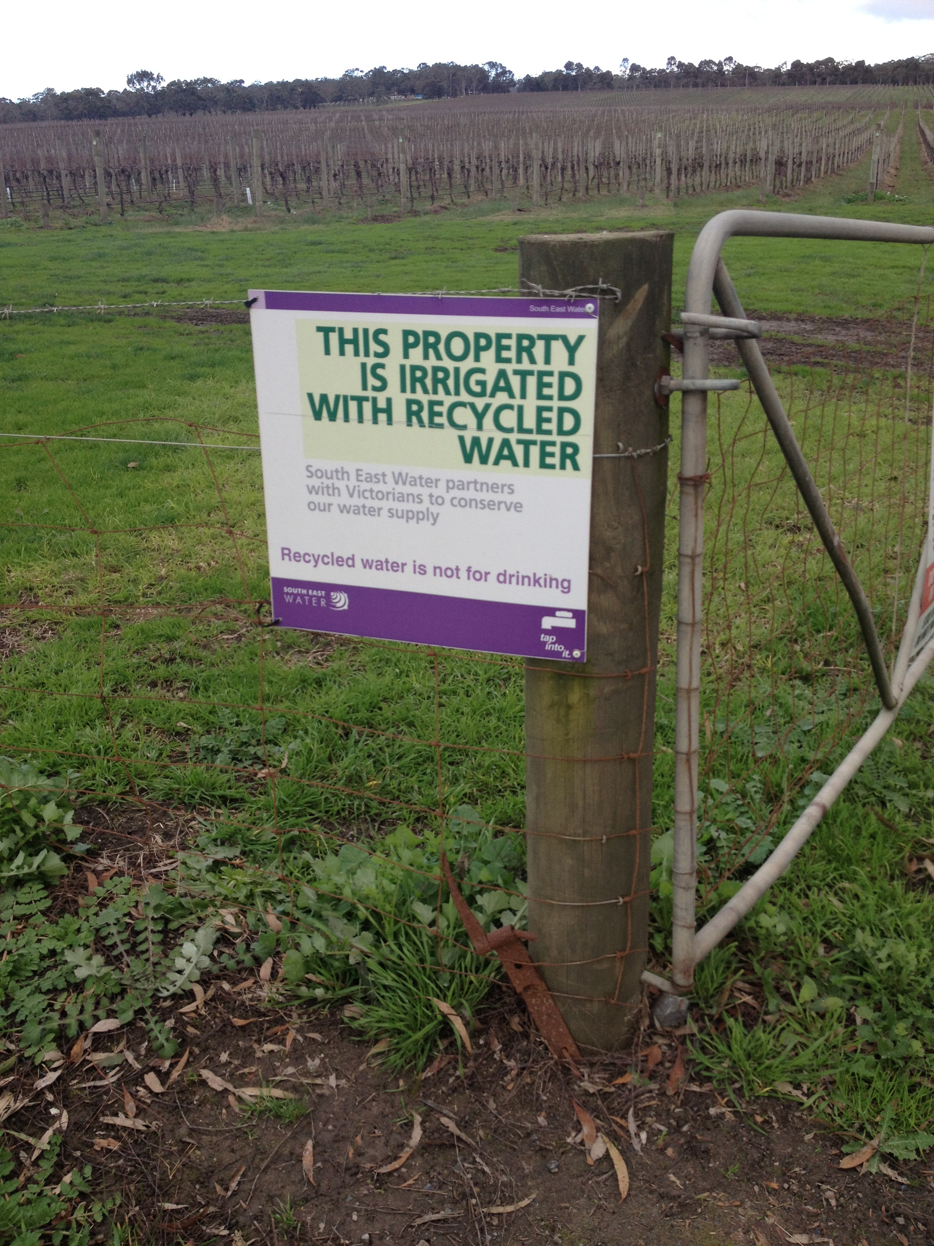 Mornington Peninsula regional recycled water irrigation program available to vineyards