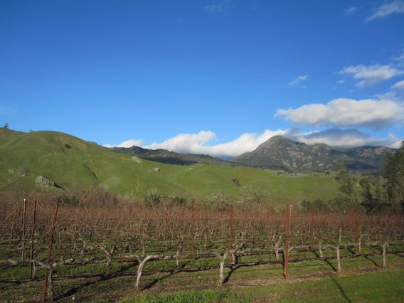 January in Napa County- green hills!