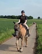 Reiten, geführte Ausritte, Pferde