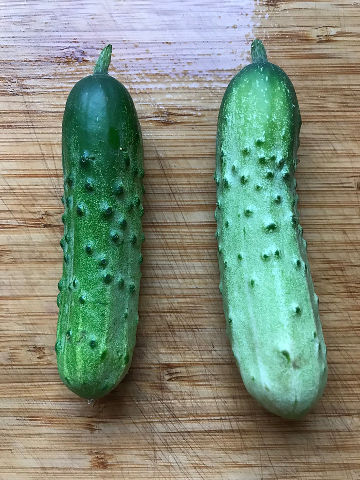 Homemade dill pickles from homegrown pickles