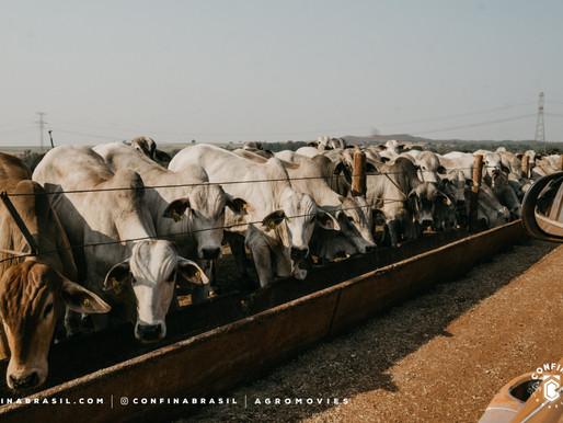 #Ep36 – Trabalho intensificado em Nova Xavantina