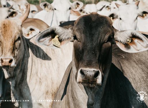 #Ep12 – Os diferentes focos da mesma pecuária