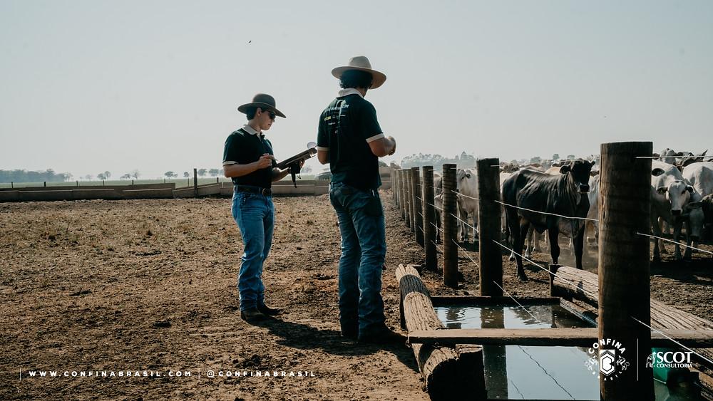 Confina Brasil. Dois tecnicos analisando o gado em confinamento