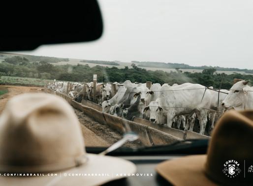 #Resumo Confina –Após passar por SP e MS, chegamos em Mato Grosso