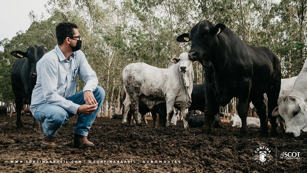 confina brasil. pecuarista ao lado do gado no confinamento.