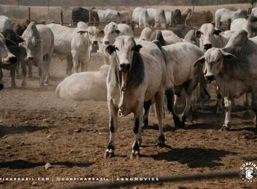 #Ep21 – A eficiência da gestão mato-grossense