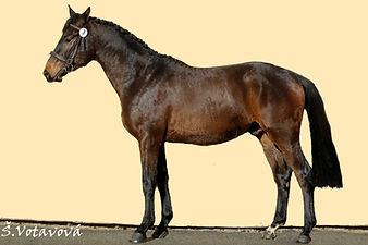 Ivanhoe (BWP - I´m Special de Muze x Sta