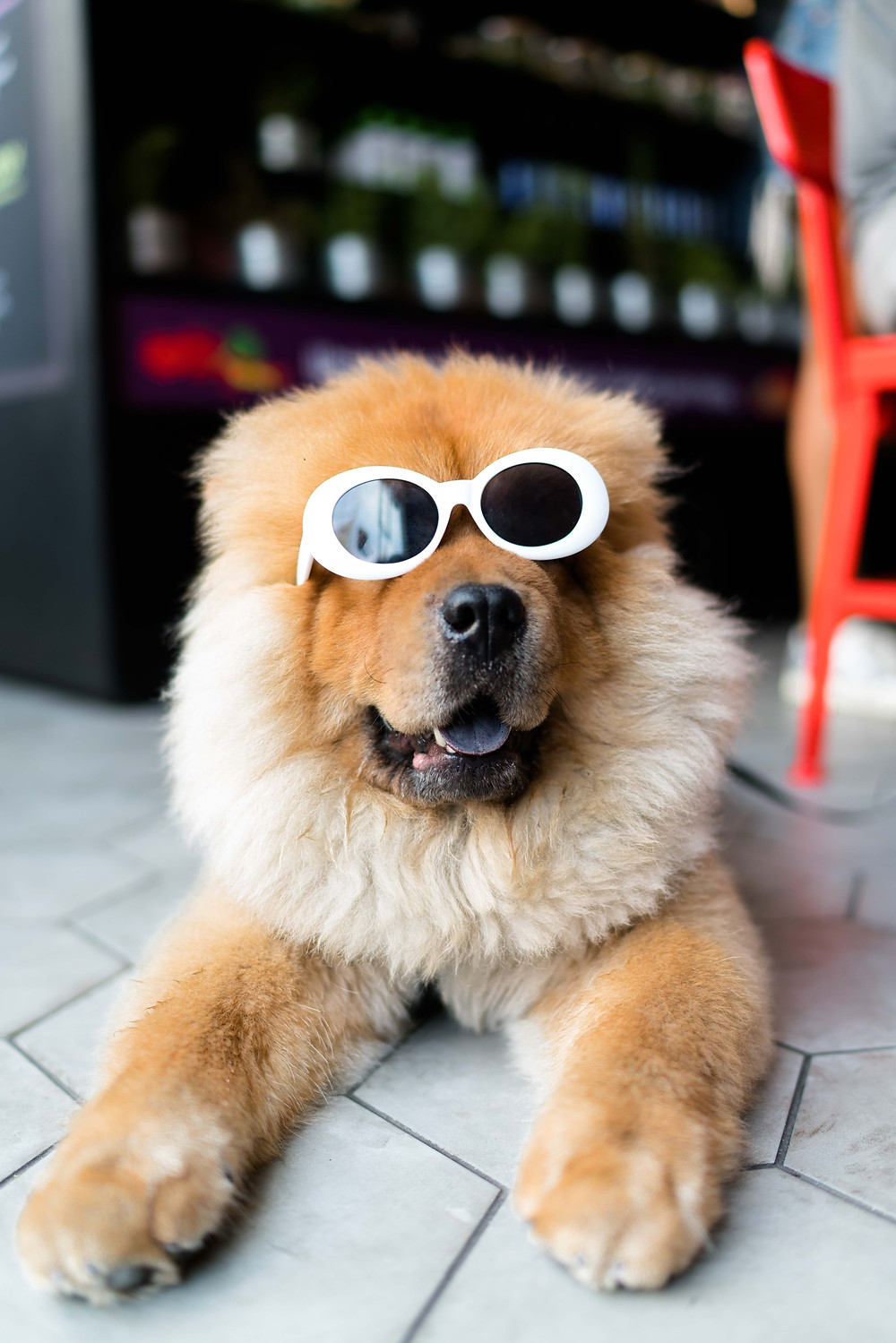 Ginger-haired dog wearing sunglasses.