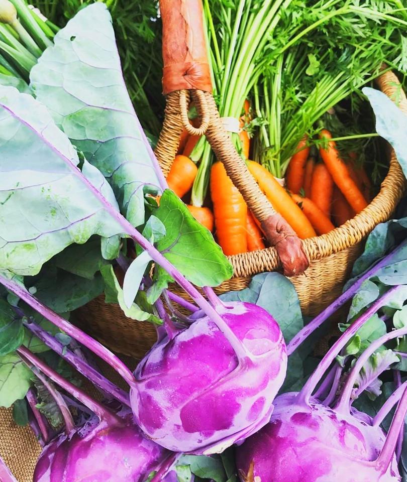 kohlrabi and carrots wild hope_edited.jp