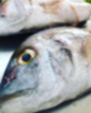 grouper2.jpg