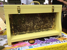 Bee City USA hive.jpg