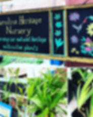 Carolina Heritage Nursery.jpg