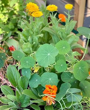 plants adventures in herbs.jpg