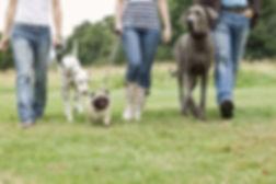 walking dogs.jpg
