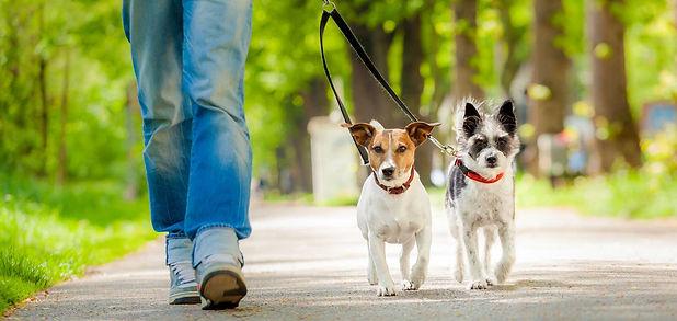 Dog_Walking_Forward2.jpg