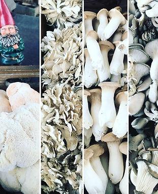 mushrooms777_edited_edited.jpg