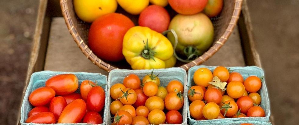 tomatoes111_edited.jpg
