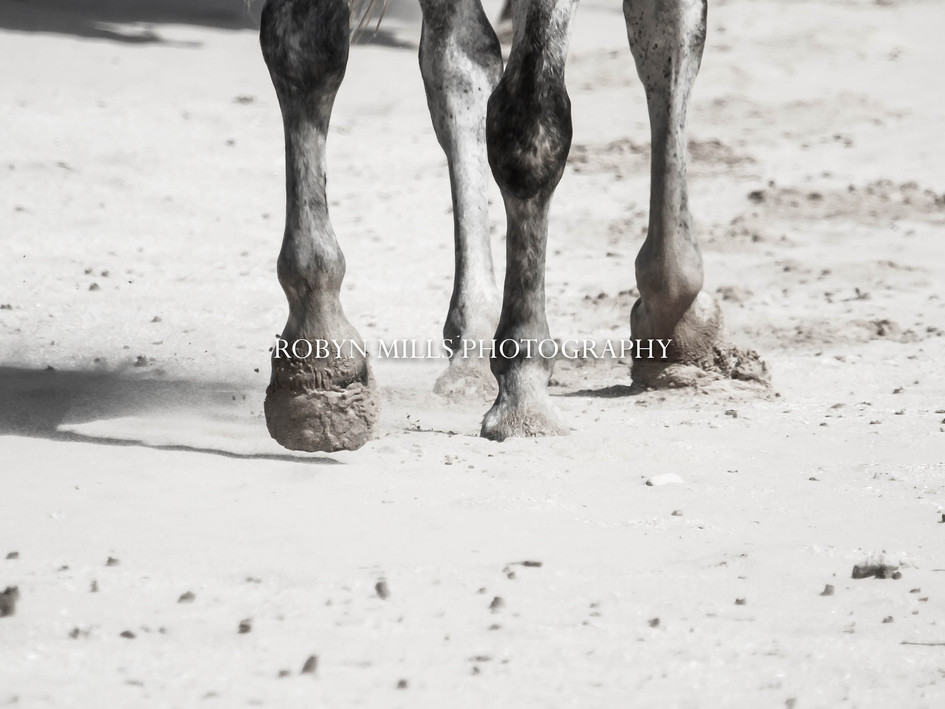 Hooves In The Sand