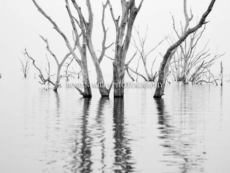 Petrified Trees 2/3