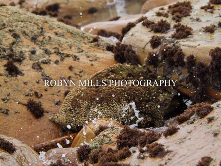Rock Pools 1/4