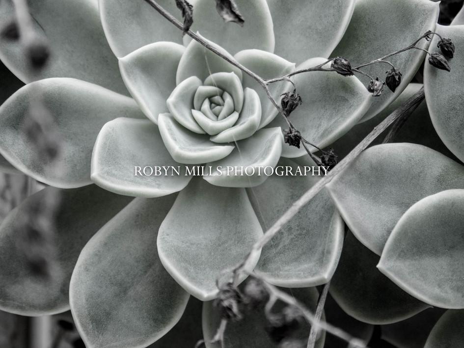 Succulents 2/2
